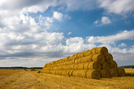 agriculture industry: Hay bales on a big pile