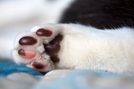 Closeup of cats foot pillows