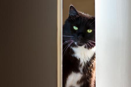 peeking: Black and white cat peeking through the door