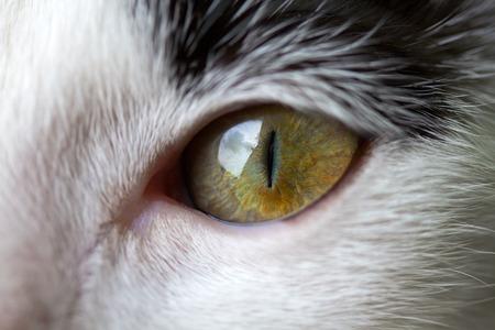 cat eye: Closeup of a cats eye Stock Photo