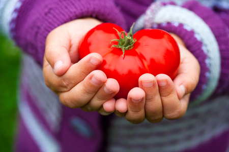 Childs hands holding a heart shaped tomato.