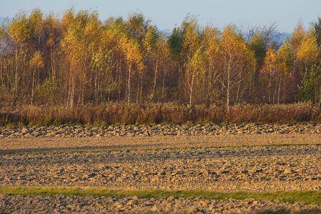 Landscape with autumn trees, Poland Stock Photo