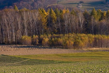 Landscape with autumn trees, Poland.