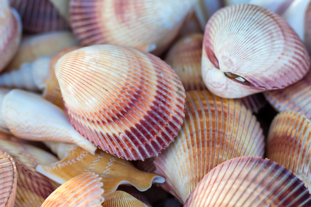 Closeup of many seashells (background)