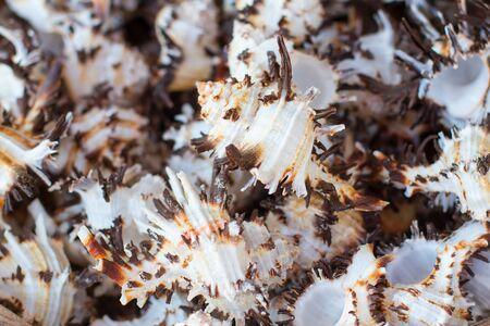 Closeup of a pile of seashells