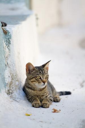 Greek cat on a street in Nissiros Stock Photo