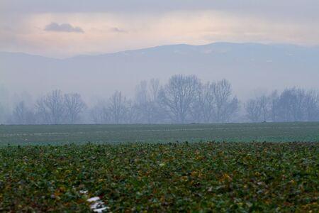 Winter fields in Poland, Opole region Stock Photo