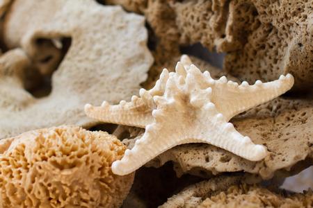 Sea star and sponges closeup