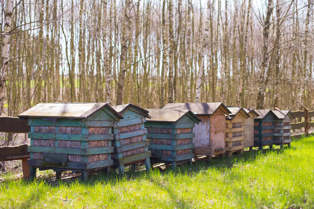 Honey bee hives in a row Stock Photo