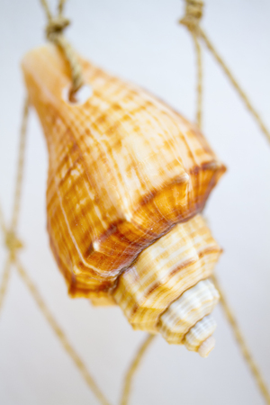 Sea shell hanging on ropes