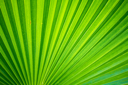 Palm bush background green color