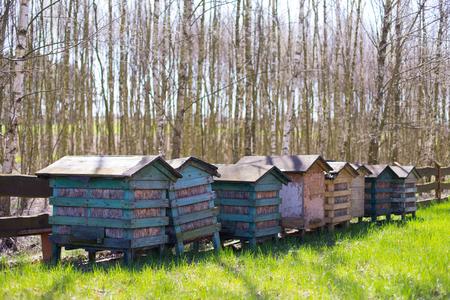Honey bee hives in the garden