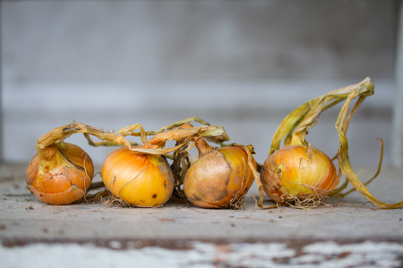 Four freshly picked onions on a peeling plank.