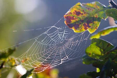 Closeup of water drops on a spiderweb. Zdjęcie Seryjne