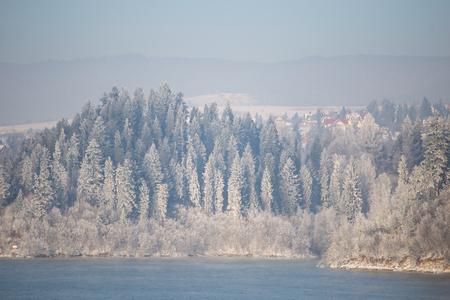 Frozen forest by Dunajec in Poland. Zdjęcie Seryjne