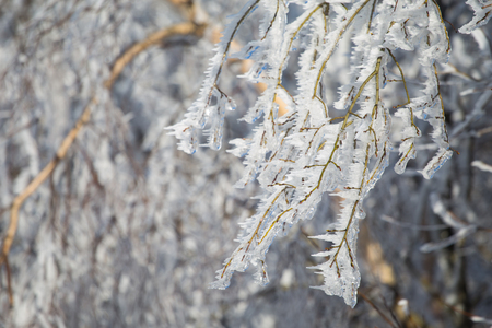 Closeup of frozen tree branches