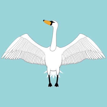 White swan open the wings, vector illustration. 向量圖像