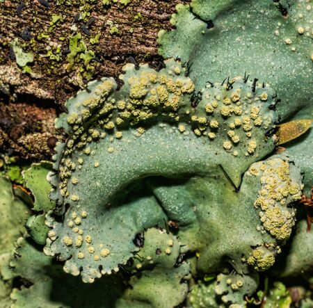 Lichens are symbiotic fungi and algae. They are able to grow on the rocks clean and often form on the rocks and stones beautiful patterns Lichen on a green stone.