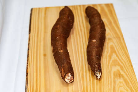 Raw yucca on the wooden table, Manihot esculenta. (Cassava raw tuber). Cassava, also called mandioca, yuca, balinghoy, mogo, mandioca, kamoteng kahoy, tapioca and tapioca root, a woody shrub in the Euphorbiaceae family native to South America. Focus selective.