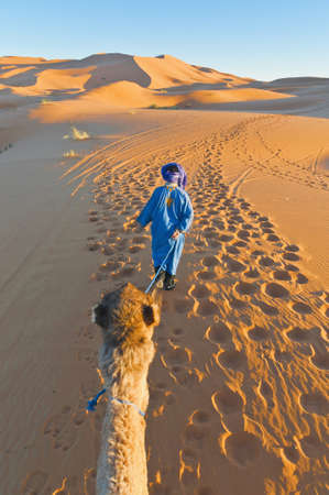 erg: Berber walking with camel at Erg Chebbi orange dunes, Morocco Stock Photo
