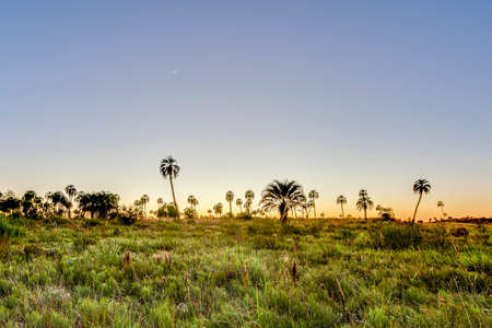 resistant: Sunrise on El Palmar National Park (Parque Nacional El Palmar), one of Argentinas national parks, located on the center-west of the province of Entre Rios, between the cities of Colon and Concordia.