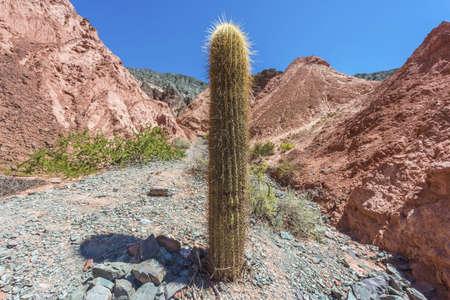 siete: Cactus on Los Colorados Path in Purmamarca, near Cerro de los Siete Colores (The Hill of Seven Colors)