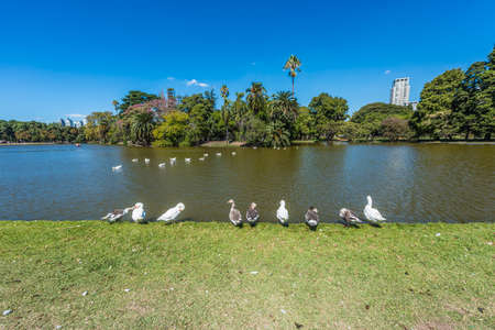 tres: Ducks on Parque Tres de Febrero, also known as the Bosques de Palermo (Palermo Woods), a 400 hectares urban park located in the neighborhood of Palermo in Buenos Aires, Argentina.