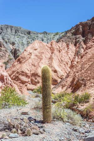 siete: Cactus on Los Colorados Path in Purmamarca, near Cerro de los Siete Colores (The Hill of Seven Colors), in the colourful valley of Quebrada de Humahuaca in Jujuy Province, northern Argentina.