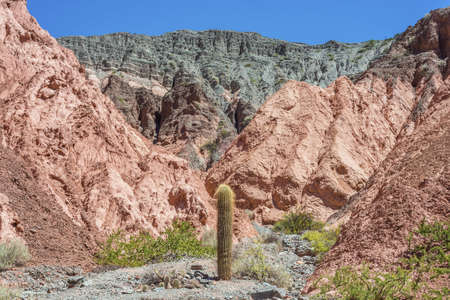 siete: Cactus on Los Colorados Path in Purmamarca, near Cerro de los Siete Colores (The Hill of Seven Colors), in the colourful valley of Quebrada de Humahuaca in Jujuy Province, northern Argentina.