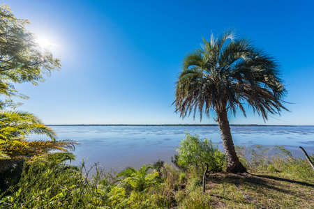 Yatay Palms (Syagrus Yatay) on El Palmar National Park, one of Argentina's national parks, located on the center-west of the province of Entre Rios, between the cities of Colon and Concordia. Stok Fotoğraf - 27370393