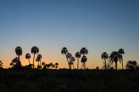 Sunrise on El Palmar National Park (Parque Nacional El Palmar), one of Argentina's national parks, located on the center-west of the province of Entre Rios, between the cities of Colon and Concordia. Stok Fotoğraf - 30807557