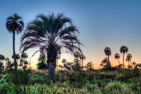 entre: Sunrise on El Palmar National Park (Parque Nacional El Palmar), one of Argentinas national parks, located on the center-west of the province of Entre Rios, between the cities of Colon and Concordia.