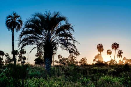 national parks: Sunrise on El Palmar National Park (Parque Nacional El Palmar), one of Argentinas national parks Stock Photo