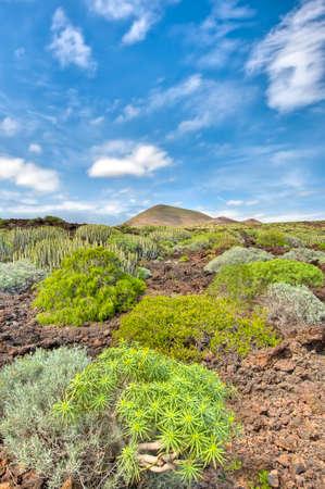 dominant color: Protected Natural Space of Malpais de Guimar, Tenerife Island