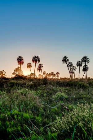 nacional: Sunrise on El Palmar National Park (Parque Nacional El Palmar), one of Argentinas national parks, located on the center-west of the province of Entre Rios, between the cities of Colon and Concordia.