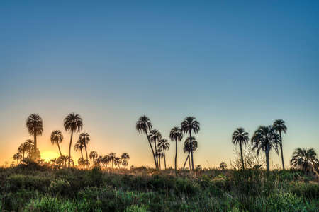 Sunrise on El Palmar National Park (Parque Nacional El Palmar), one of Argentinas national parks, located on the center-west of the province of Entre Rios, between the cities of Colon and Concordia.
