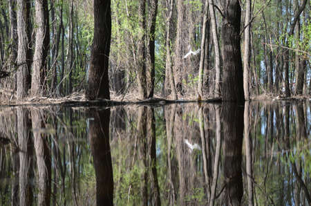 weald: Flooded trees mirrored in the water Stock Photo