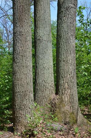 weald: triple tree