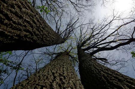 weald: dark leafless trees