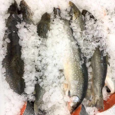 fish in ice: Fish on ice at market