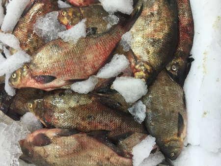 crucian carp: Crucian carp fish on ice at the market as background