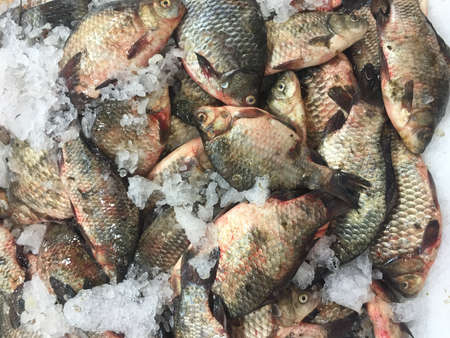 crucian: Crucian carp fish on ice at the market as background