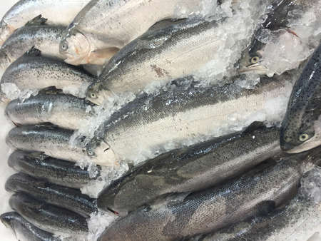 fishy: Fresh fish on ice in the market
