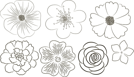 Flowers vector collection