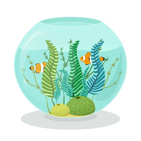 Aquarium with clown fishes, corals and algae in flat style. Vector hand drawn illustration of reef fishes swimming in an aquarium. 일러스트
