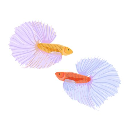 Fighting siamese fishes vector illustration, isolated on white background. Cartoon betta or cockerel fishes in flat style. Different layers.
