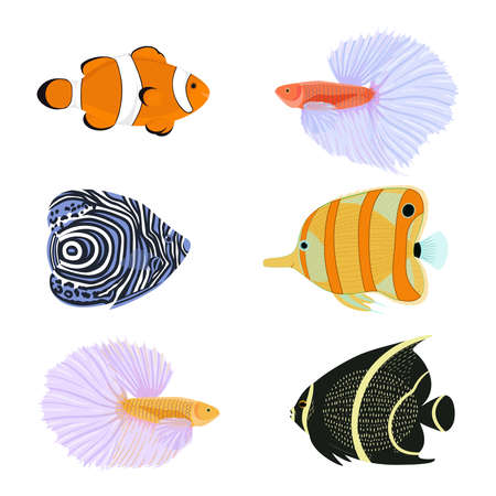 Exotic fishes cartoon collection. Vector set with tropical fishes in flat style.