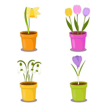 Houseplants collection of spring flowers in clay pots. Daffodil, tulip, snowdrop, crocus illustration.