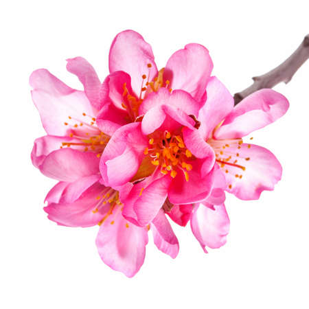 Flores De Color Rosa Great Flores De Color Rosa Gratis Png Y