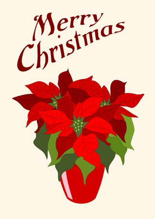 illustrated hand drawn red poinsettia - christmas flower